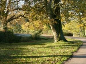 New Forest landscape at Bramshaw